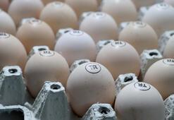 Yumurtada fiyatlar arttı