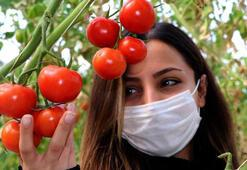 Eksi 40 derecede serada domates üretimi