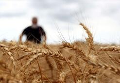 Ekmeklik buğday stokunun yeterli olduğu açıklandı