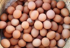 Afyonkarahisardan 32,6 milyon dolarlık yumurta ihraç edildi