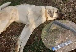 Sokak köpeğine çarpıp kaçtı, plaka ve tampon parçasından yakalandı