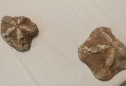 Çanakkale'de ele geçirildi Milyonlarca yıl öncesine ait