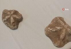 Çanakkale'de 6 milyon değerinde denizyıldızı fosilleri ele geçirildi