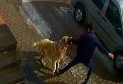 Saldırgan köpeği yumrukladı, kendisini böyle kurtardı