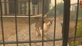Milas'taki yangında mahsur kalan kedi gazeteciler tarafından kurtarıldı