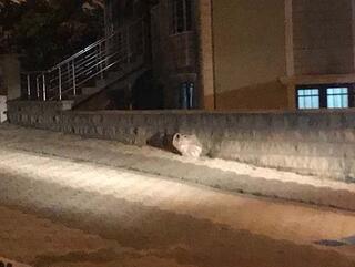İstanbulda korku dolu anlar Poşet içinde...