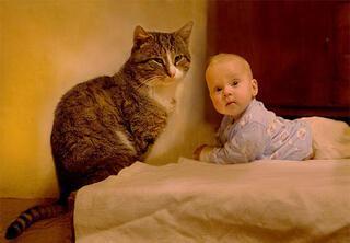 Çocukların sevimli dostu kediler