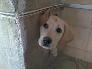 Pişmanlığı yüzünden okunan sevimli köpekler