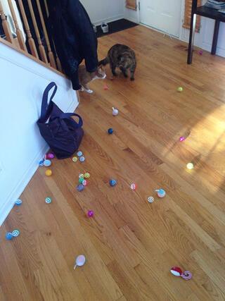 İstifçi kediler