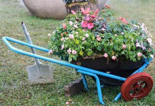 Tarçınla solan bitkilerinizi canlandırın