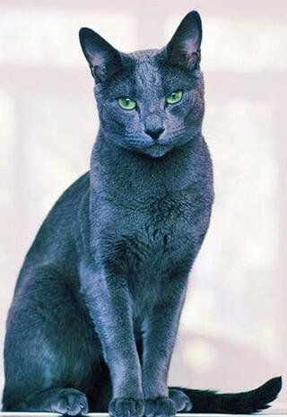 Bir servet değerinde olan 19 kedi cinsi