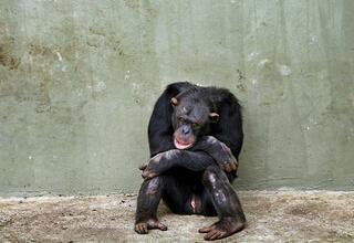 Maymunlar hakkında inanılmaz gerçekler