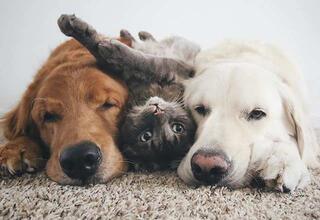 Birbirini seven 3 arkadaş