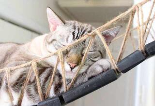 Sevimli dostlarına kedi köprüsü tasarladılar