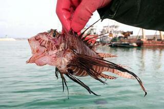 30 yıldır balıkçıyım İlk kez böylesini gördüm