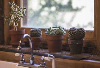 Evde kaktüs nasıl yetiştirilir
