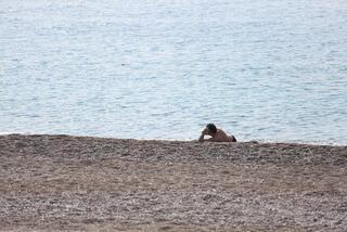Kıyafetiyle denize giren adam polisi alarma geçirdi