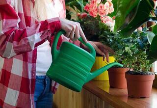 Bahar mevsiminde bitki bakımı nasıl olmalı