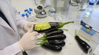 Deri hastalıklarına patlıcanlı çözüm