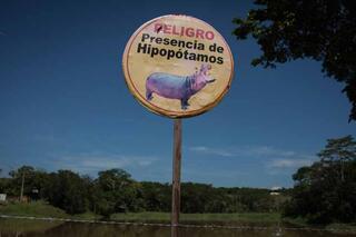 Escobar Kolombiyaya getirmişti Sürü oldular