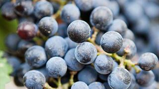Üzüm neye iyi gelir İşte üzümün faydaları