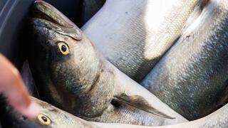 Balığın yanında roka yenir mi