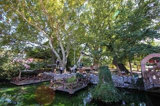 Osmanlının beşiğindeki anıt ağaçlar