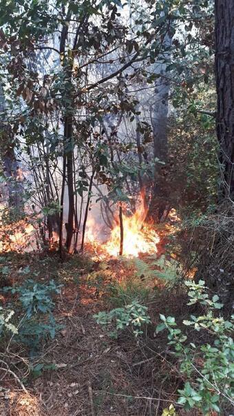 Son dakika Beykozda ormanlık alanda yangın