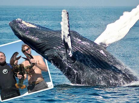 SON DAKİKA: Dalış yaptı! Balina ağzıyla yakaladı