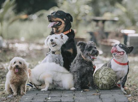 Fino Köpek Cinsleri: Fino Cinsi Köpek Türleri, İsimleri ve Özellikleri Nelerdir?