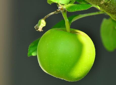 1 Adet Yeşil Elma Kaç Kalori? Yeşil Elmanın Protein, Vitamin Ve Besin Değerleri