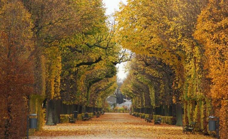7. Viyana, Avusturya
