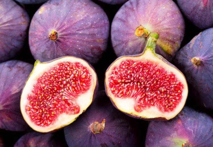 cinsel organi uzatan bitkiler