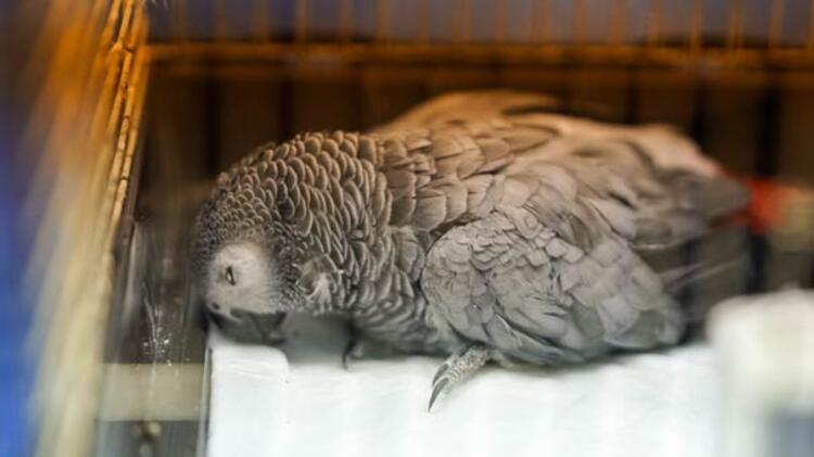 Murat Özdemirin papağana işkence anlarının detayları ortaya çıktı
