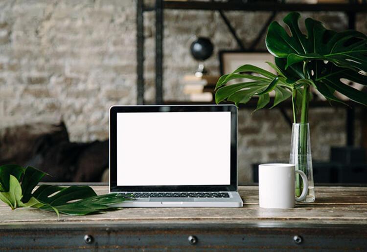 Ofisinizi bitkilerle donatın