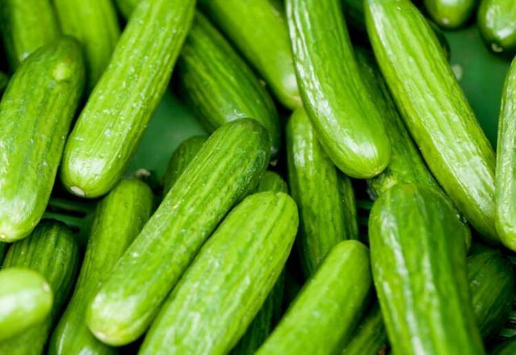 Domates, salatalık anne gibidir; yedirir, içirir, korur