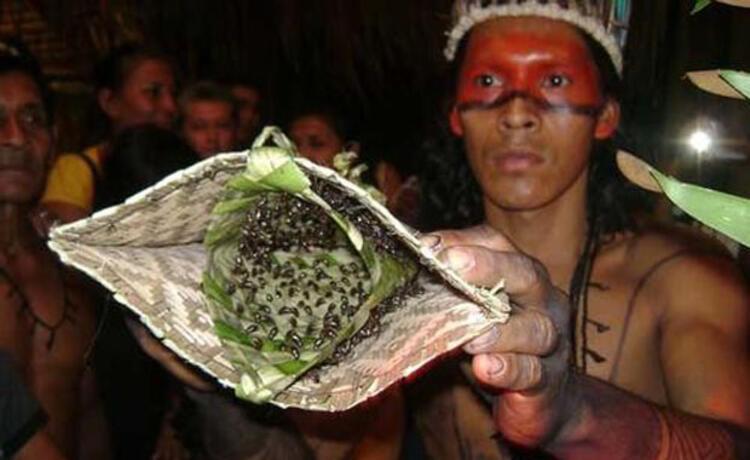Mermi Karınca Eldiveni töreni, Brezilya