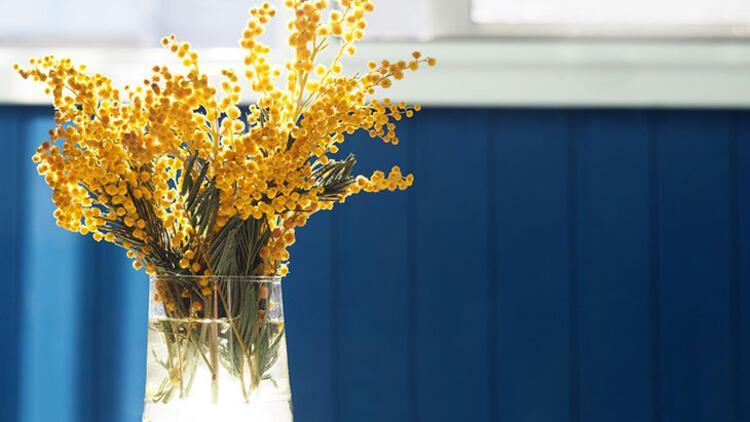 Farklı renkte çiçeklere yer açın