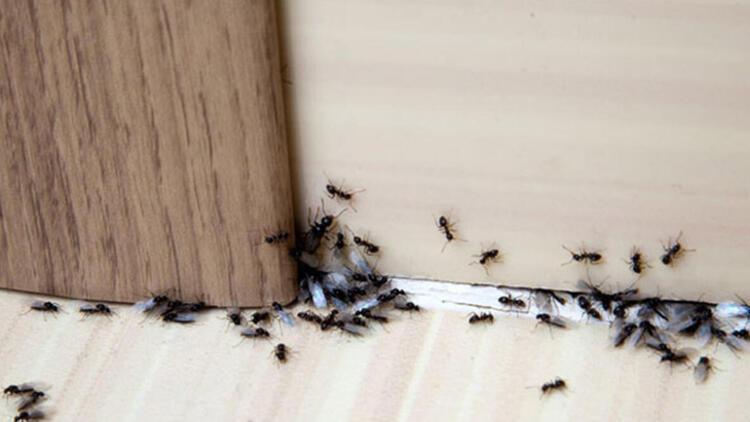 Karıncaları uzak tutabilirsiniz