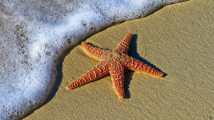 5. Denizyıldızı: