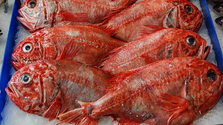 Turuncu kütük balığı