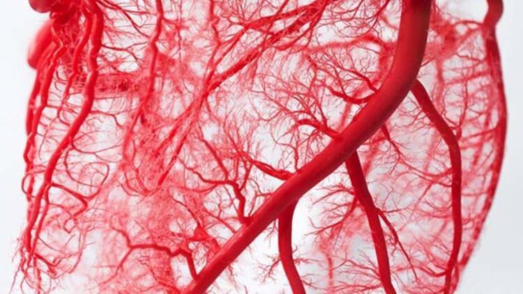 Vücudun genç kalması, güçlü damar ağı sayesindedir