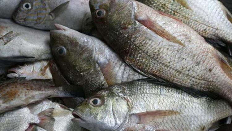 Balık: Konserve alabilirsiniz