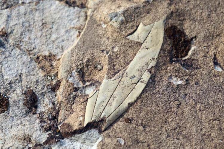 Kayaların taşlaşmış kumdan oluştuğu anlaşılıyor