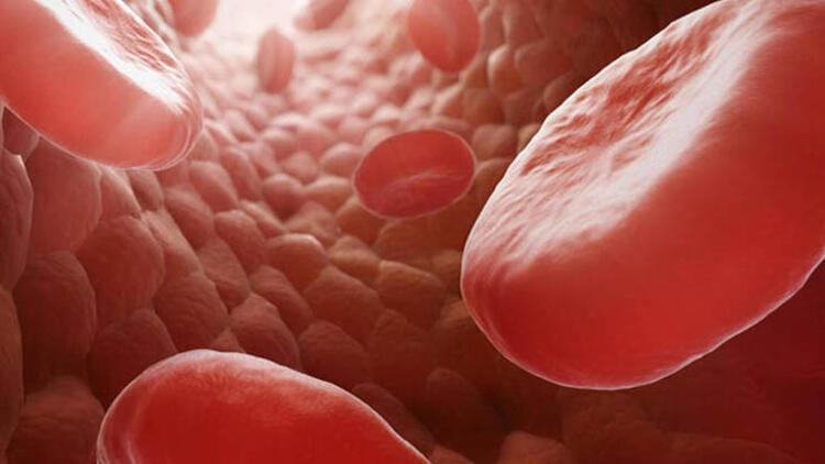 Kan basıncını dengeler