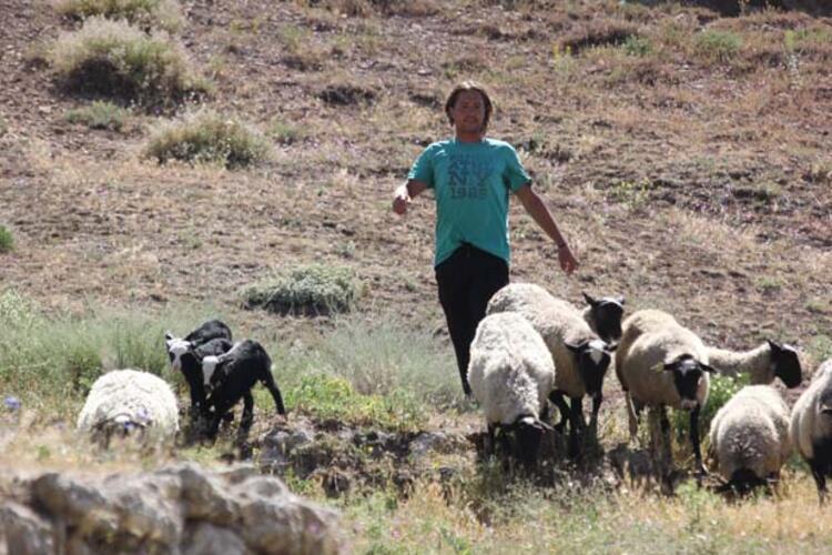 10 koyunla başladı, 130 koyunluk sürüsü oldu