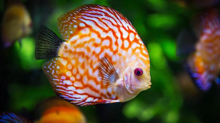 3. Balık