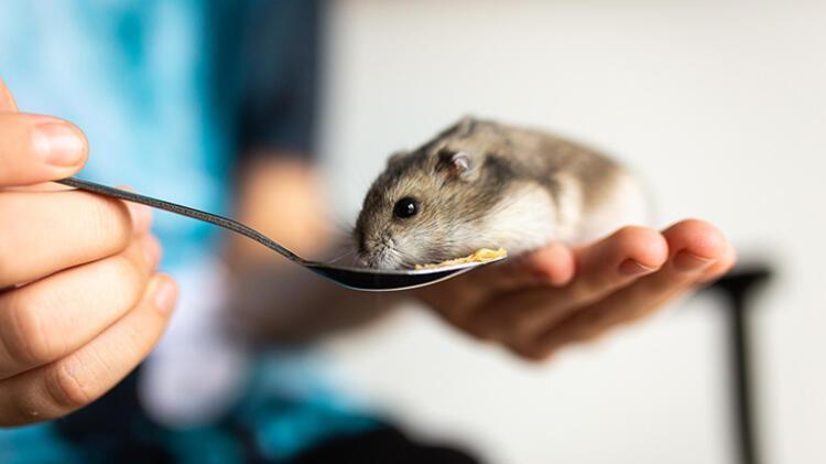 6. Hamster