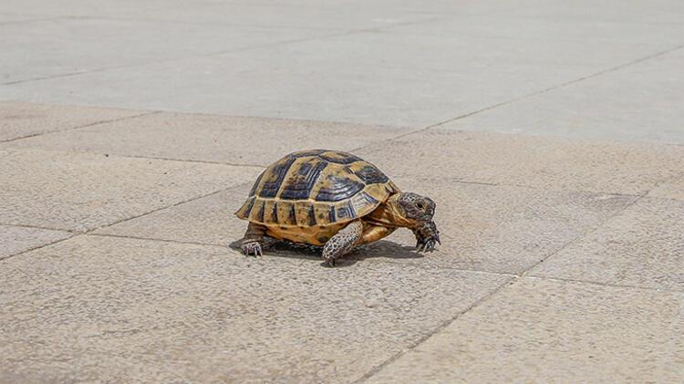 5. Kaplumbağa