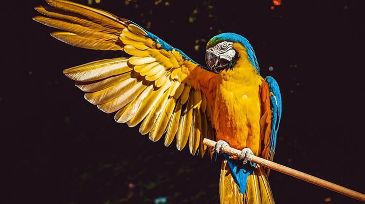 4. Kuş